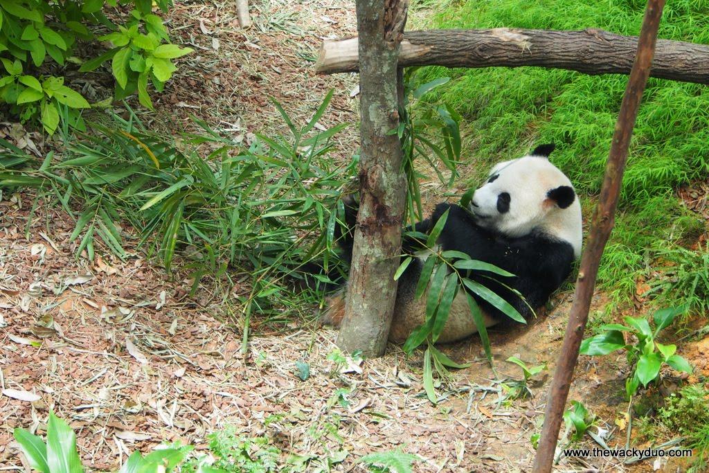 Singapore Zoo 253